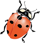 Lady Bug Beetle