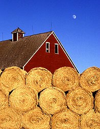 Image of rolls of hay on farm, sustainable farm that is.