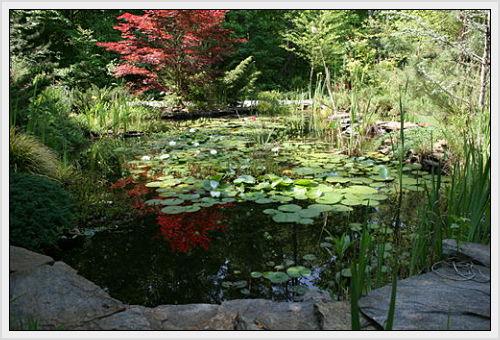 My front yard fish pond