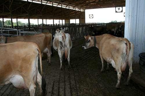 local organic dairy farm business