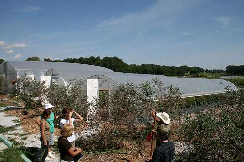 organic farm greenhouses