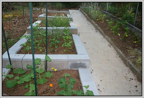 Square-foot Garden with raised beds of cinder blocks